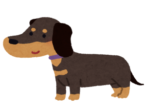 dog_dachshund_blacktan