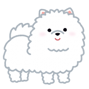 dog_pomeranian_white