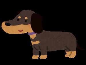dog_dachshund_blacktan